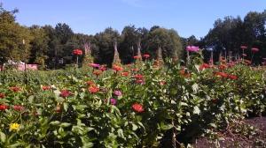 food-garden